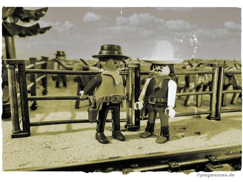 Longhorn-Rinder in den Stallungen im Außenbereich