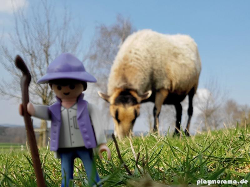 Milka Schäfer mit echtem Schaf