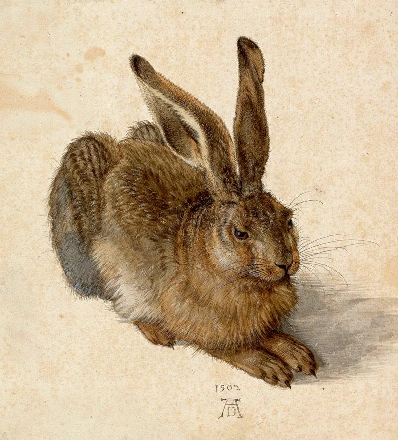 Der Feldhase ist der Titel eines Aquarells von Albrecht Dürer und die wohl bekannteste aller Naturstudien Dürers, Entstehungsjahr 1502.