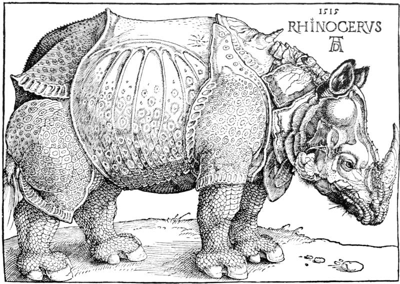 Rhinocerus ist der Titel eines grafischen Werkes von Albrecht Dürer aus dem Jahre 1515.